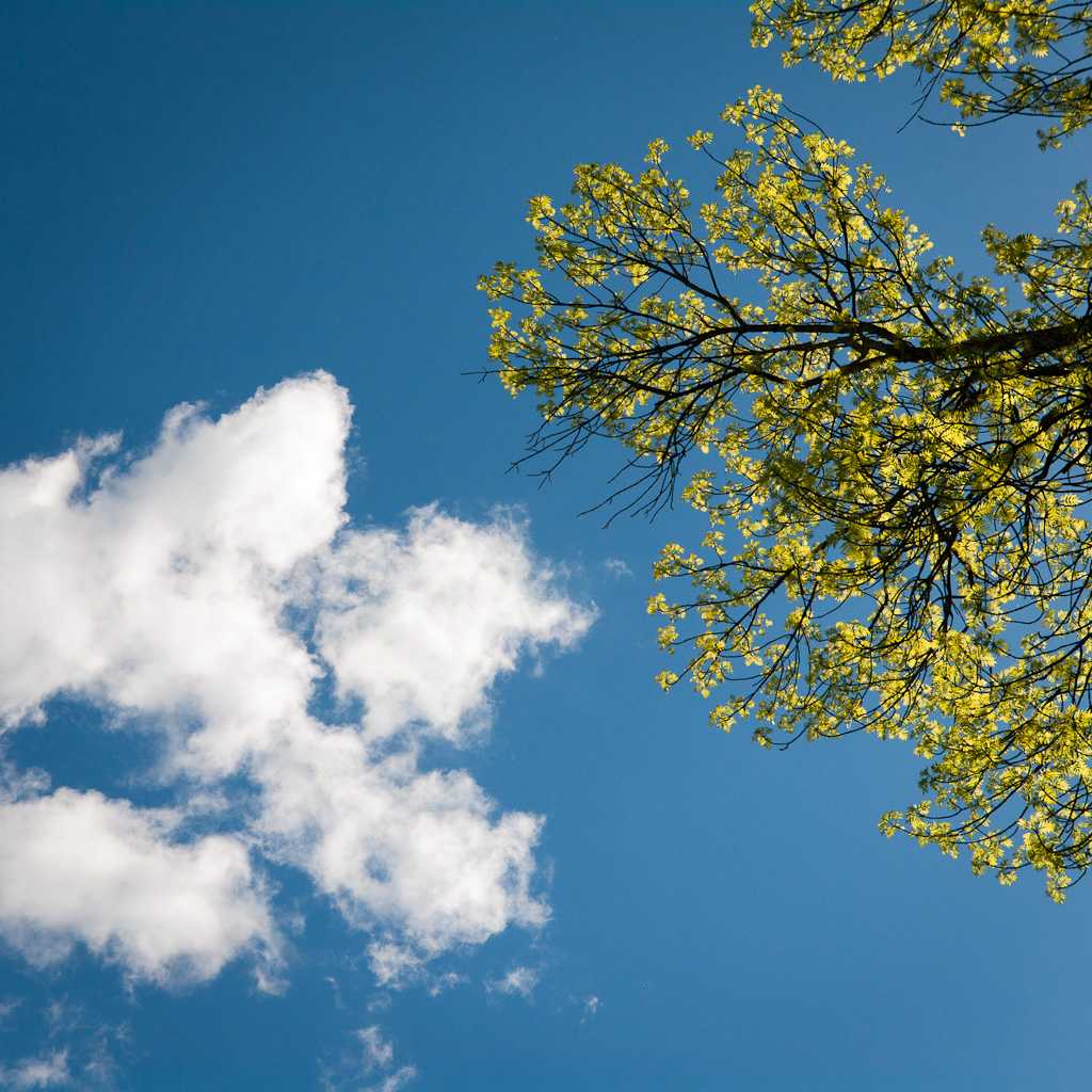 Blue sky, clouds and green leaves, iPad Wallpaper