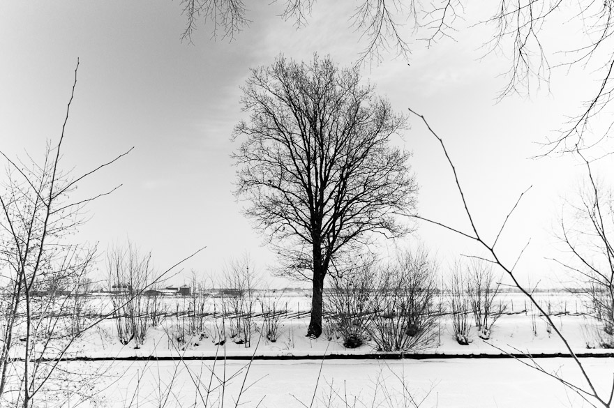 Tree by the river in winter and snow, Uppsala, Sweden