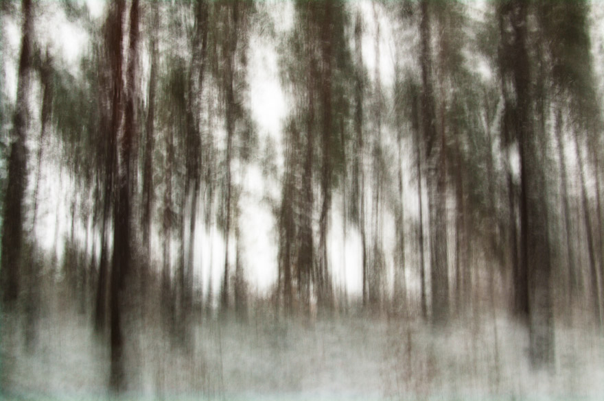 Long exposure shot of trees in forest, Uppsala, Sweden