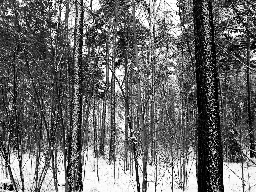 Trees in forest in Uppsala, Sweden