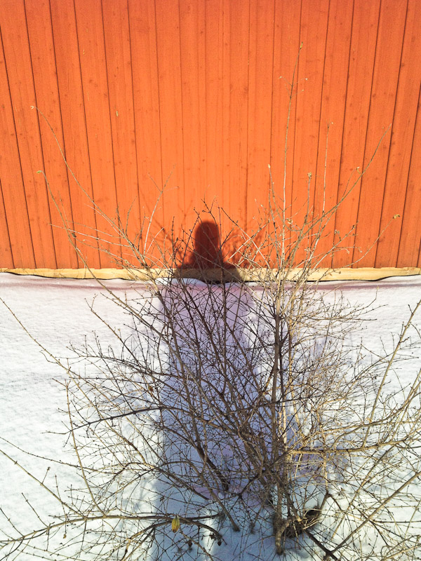 Shadow on red shed and snow, Uppsala, Sweden