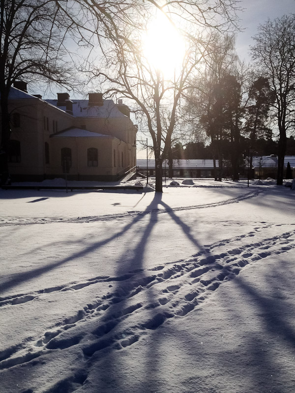 Shadow of tree in snow, Uppsala, Sweden