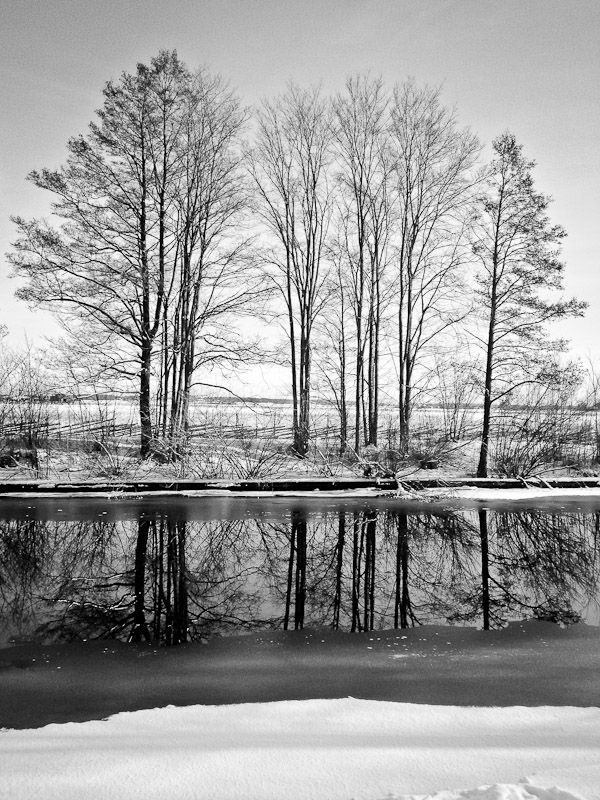 Trees by river, Uppsala, Sweden