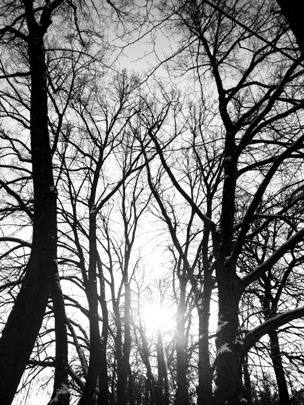 Sun and trees in Uppsala, Sweden