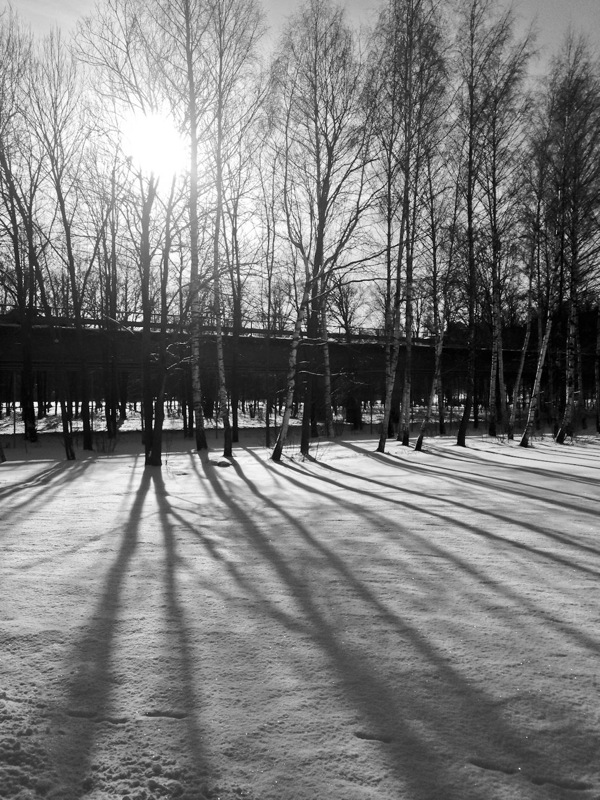 Tree shadows on snow, Uppsala, Sweden