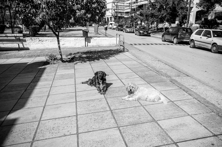 Dogs in Thessaloniki, Greece